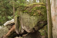 Moss stone between rocks in forest. Green moss boulder stone balanced between trees in green forest Stock Photography