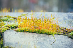 Moss on stone slabs Stock Image