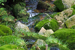 Moss on stone. Small stream with stones covered with moss Stock Images