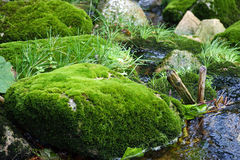Moss on stone. Small stream with stones covered with moss Stock Photos