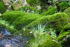 Moss on stone. Small stream with stones covered with moss Stock Image