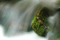 Moss on stone in the stream Royalty Free Stock Images