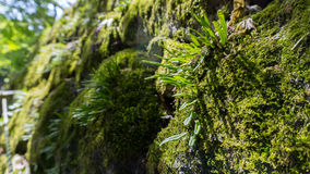 Moss on stone with sunlight ray. Moss on stone with beautiful sunlight ray Stock Photography