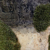 A moss on the stone Royalty Free Stock Image