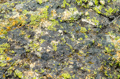 The moss on the stone Royalty Free Stock Photos