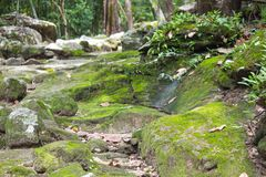 Moss on stone in tropical forest,Thailand royalty free stock photos