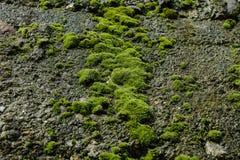 Moss Stone Wall Royalty Free Stock Photography
