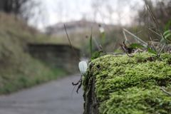 Moss on Stone Wall royalty free stock images