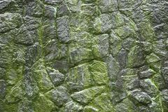 Moss on stone wall. Moss growing on stone wall, Texture of stone wall covered green moss Stock Photo