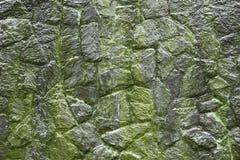 Moss on stone wall Stock Photo