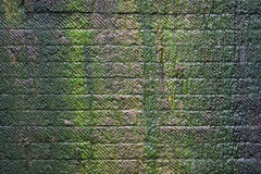 Green moss on stone wall Royalty Free Stock Photo