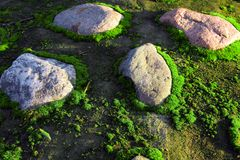 Moss and stones Royalty Free Stock Photos