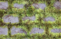 Moss and Stones Royalty Free Stock Photo