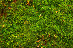 Moss on stones Royalty Free Stock Image
