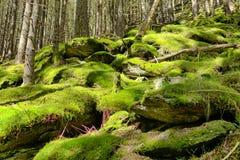 Moss on stones Royalty Free Stock Photos