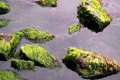 Moss and stones Royalty Free Stock Images