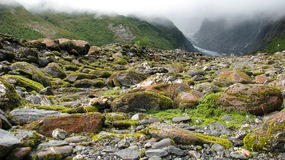 Moss on the stones. Stony way to Franz Josef Glacier, New Zealand royalty free stock photo