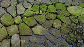 moss on stones, Torshaven, Faroes islands