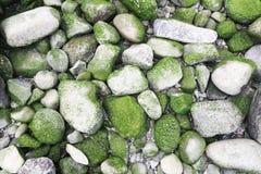 Moss Stones verde en una playa Imagenes de archivo