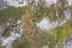 Moss on Stonewall Royalty Free Stock Photo