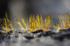 Moss on stonewall Stock Image