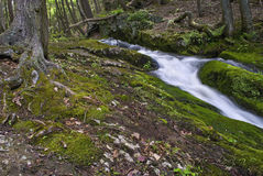 Moss and Stream. A stream flows through the green foliage of Stokes State Forest in New Jersey during late Spring, early Summer Royalty Free Stock Photo