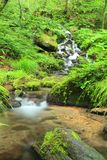 Moss and stream Royalty Free Stock Photo