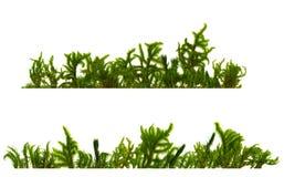 Moss_stripes Royalty-vrije Stock Afbeelding