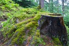 Moss Stump Stock Photos