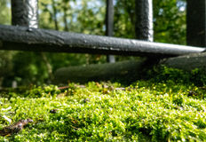 Moss in Sunlight Under an Iron Fence Stock Image