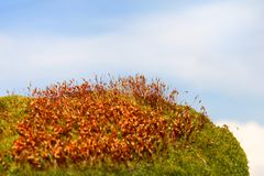 Moss surface Royalty Free Stock Photography