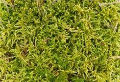 Moss in swamp Stock Photo