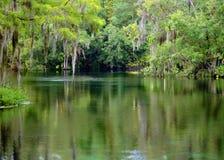 Moss Swamp fotografia de stock royalty free