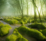 Moss Swamp Stockbilder