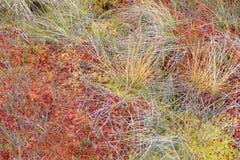 Moss in swamp Stock Photos