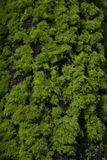 moss szczekać drzewo. Obraz Royalty Free