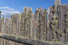Moss täckt Stockadestaketbakgrund eller bakgrund arkivfoto