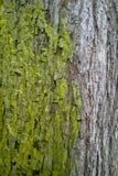 Moss Take Over Coexistence, close up fotos de stock royalty free