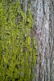 Moss Take Over Coexistence, Closeup Royalty Free Stock Photos