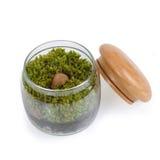 Moss terrarium. Royalty Free Stock Images