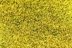 Moss texture, background Royalty Free Stock Photography