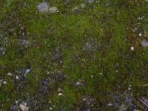 Moss texture background. Stock Image