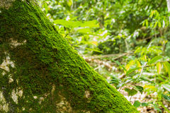 Moss texture, background and design for nature. Royalty Free Stock Photography