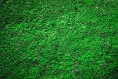 Moss texture Stock Photos