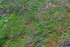 Moss texture Stock Images