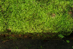Moss texture, background Stock Images