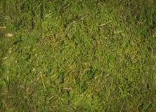 Moss texture background Stock Photos