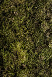 Moss texture, backgroung with copyspace. Green and brown moss texture, backgroung with copyspace Royalty Free Stock Photo