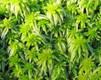 Moss texture. Fresh green moss texture in a forest stock photo