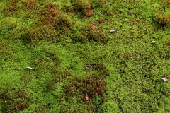 Moss texture in a japanese garden Stock Images